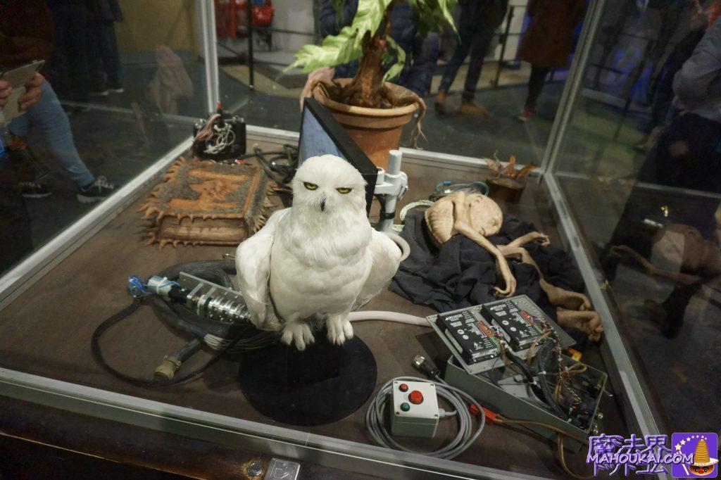 ヘドウィグ(白い梟)、怪物的な本、マンドレイク、小さなヴォルモート? ワーナーブラザーススタジオツアー メイキング・オブ・ハリーポッター(英国/ロンドン)